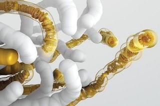Creati altri 5 cromosomi sintetici del lievito: perché siamo vicini alla vita artificiale