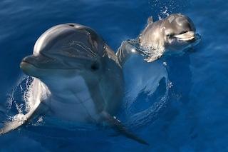 I pescatori delle Eolie ce l'hanno con i delfini e non c'è davvero niente da ridere