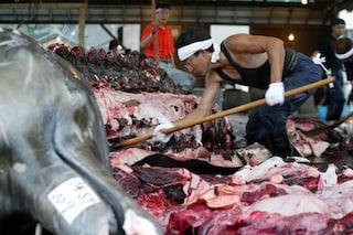 Strage di balene in Giappone: 333 uccise in 5 mesi per 'scopi scientifici'. Ma non è vero!