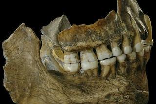 Dalla dieta vegetariana all'uso di farmaci, i Neanderthal continuano a sorprenderci
