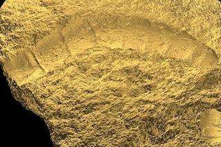 Fossile di 1,6 miliardi di anni riscrive la storia evolutiva: forse è la pianta più antica