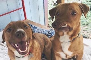 Picasso il cane 'storto' e il fratello Pablo, salvati dalla morte, fanno impazzire il web