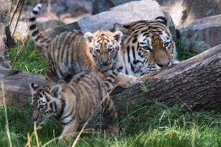 I giovani salveranno gli animali (si spera): è la Giornata Mondiale della Fauna Selvatica