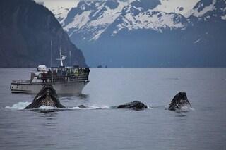 Tutto quello che NON devi fare se vedi una balena