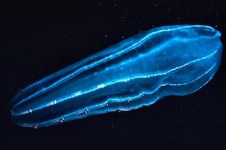 Gli scienziati si sono sbagliati: non sono le spugne gli animali più antichi