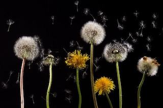 6 consigli utili per contrastare gli effetti negativi dell'allergia ai pollini