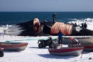 "Chris, 16 anni, ha ucciso una balena di 200 anni. ""È una tradizione"": choc in Alaska"