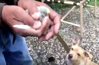 Quel momento in cui vuoi liberare un uccellino, ma il tuo cane ha altri piani in mente