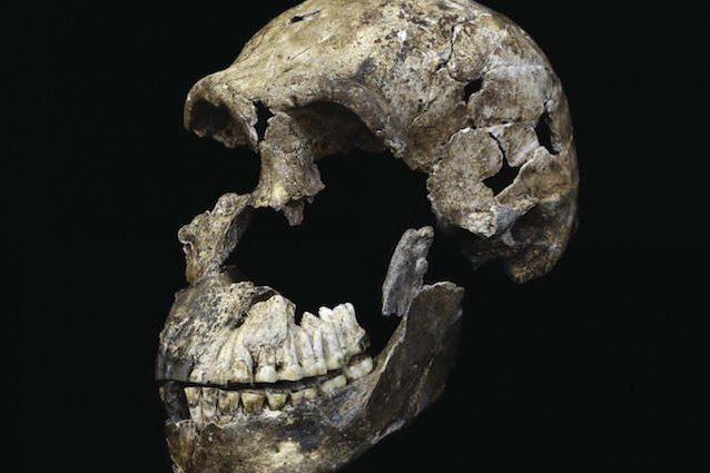 Quando l'Homo naledi incontrò i nostri antenati in Africa: novità dalla Rising Star Cave