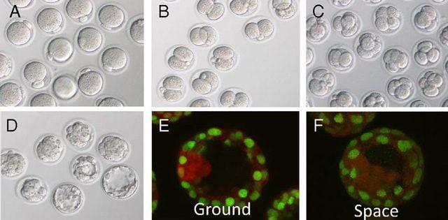 La crescita delle cellule