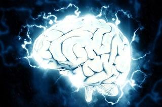 Riscritta la storia evolutiva del nostro cervello