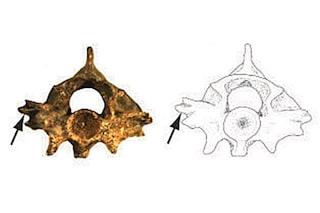 """Scoperto fossile di serpente """"alato"""" vissuto in Nord America cinque milioni di anni fa"""