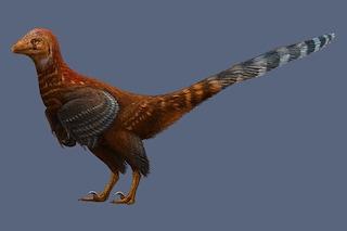 Scoperta in Cina una nuova specie di dinosauro: aveva le penne degli uccelli moderni
