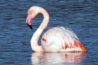 Birdwatching in Italia: ecco i 5 posti migliori in cui osservare gli uccelli