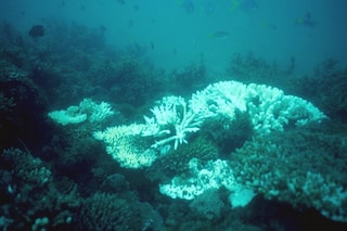 Grande Barriera Corallina, quasi perse le speranze: il grido di allarme degli scienziati
