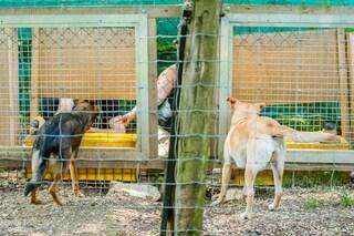 Cani e lupi sanno riconoscere le ingiustizie e non le accettano: ecco come reagiscono