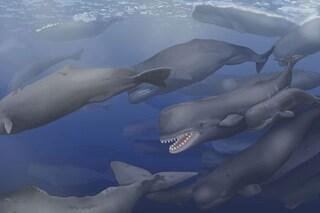 Estinzione di massa della megafauna marina scoperta a sorpresa