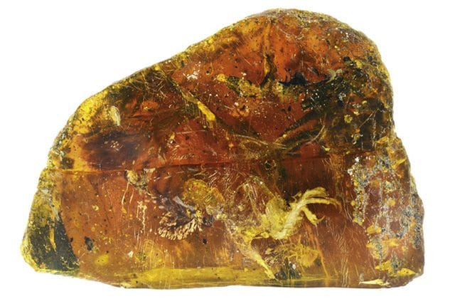 Ha 100 milioni di anni l'uccello trovato nell'ambra: le immagini raccontano il suo passato