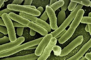 221 casi di 'batteri da incubo' nel 2017 e gli antibiotici non possono fermarli