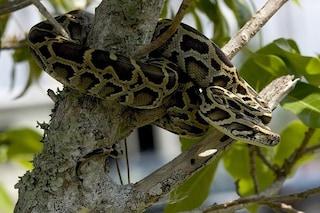 Alla scoperta dei segreti più intimi dei serpenti per curare le nostre malattie