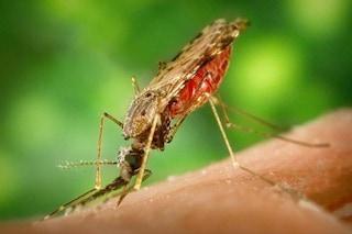 700mila morti per le punture di insetti ogni anno. OMS: rischia l'80% della popolazione