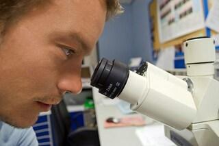 Cancro: cellule tumorali 'cannibali', scoperto il meccanismo
