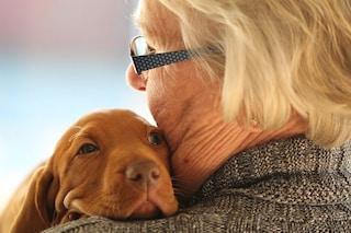Un cane allunga la vita: lo dice la scienza