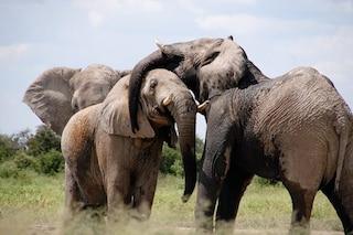 Perché gli animali sono diventati giganteschi