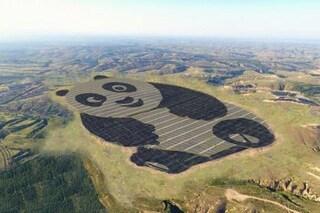 È a forma di panda e si trova in Cina la centrale fotovoltaica più bella del mondo