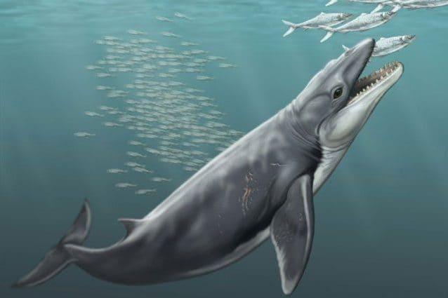 Le balene avevano denti affilati e letali: la scoperta cambia il passato dei giganti 'buoni'