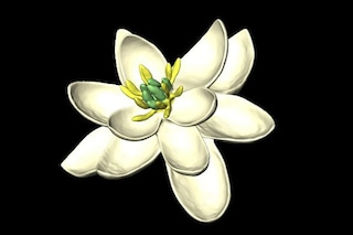 È il primo fiore nato sulla Terra e l'hanno ricostruito in laboratorio: ecco come era fatto