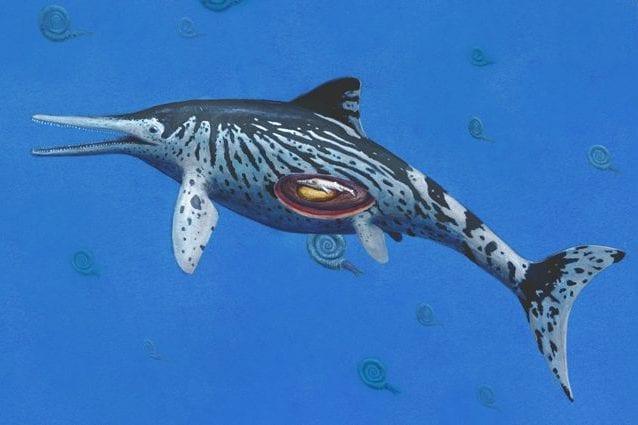 Fossile di ittiosauro incinta scoperto 'per caso': è il più grande di sempre