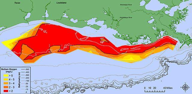 L'estensione della zona morta: credit NOAA