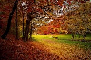 Il colore delle foglie in autunno: perché da verdi diventano gialle, arancioni e rosse