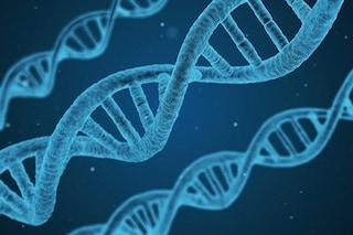 Editing su embrioni umani: corretto da malattia un 'mattone' di DNA, è la prima volta