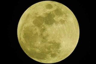 La Luna piena delle alci in amore sta arrivando: come e quando godersi lo spettacolo