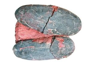 I dinosauri deponevano uova blu come gli uccelli moderni: la scoperta entusiasma gli studiosi