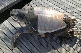 La tartaruga Gaetana è stata uccisa a Taranto: colpita a morte alla testa con un remo