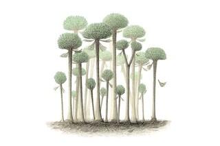 Gli alberi più antichi del mondo 'perdevano pezzi' per crescere