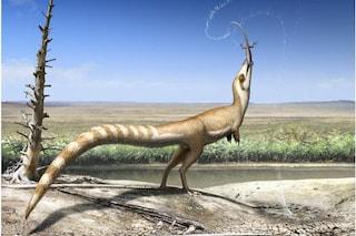 Un dinosauro con la faccia da procione: tutto sul Sinosauropteryx prima e le sue piume
