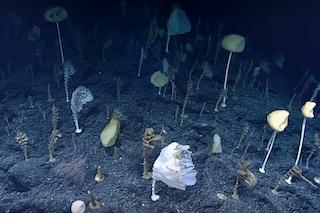 La 'Foresta delle Assurdità' emerge dagli abissi di un atollo contaminato da test nucleari