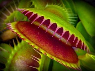 Esistono piante assassine? La verità sulla vegetazione mangia-uomini