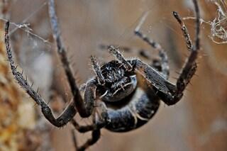 La paura dei serpenti e dei ragni è davvero innata: 'parola' di neonati