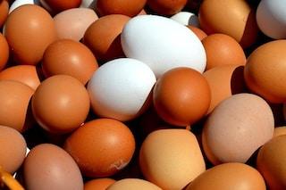 Farmaci nelle uova OGM per combattere cancro, epatite e sclerosi multipla