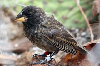 Per la prima volta, una nuova specie di uccello è nata sotto gli occhi dei ricercatori