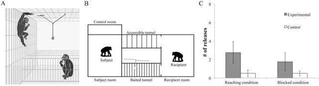 Una rappresentazione grafica dell'esperimento