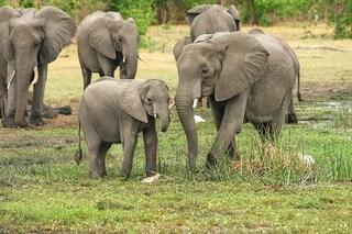 Trofei dei 'safari della morte': sì di Trump all'importazione, nel mirino elefanti e leoni