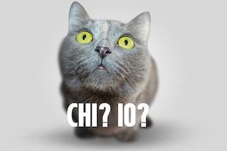 Nonna addestra 65 gatti per svaligiare case? I felini rubano solo per sé