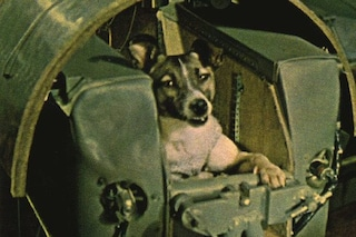 63 anni fa il lancio di Laika, la cagnolina-astronauta mandata a morire nello spazio