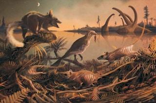 Piccoli come topi, notturni e 'coinquilini' dei dinosauri: sono i nostri più antichi antenati